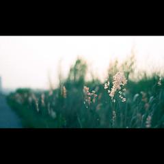 (bbq_0406) Tags: sunset plant flower nature peace 5 sony voigtlander pale nex 40mmf14 nex5