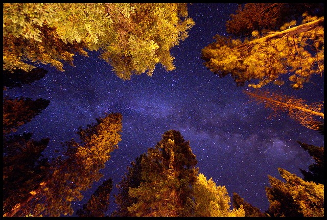 Milky way through the trees