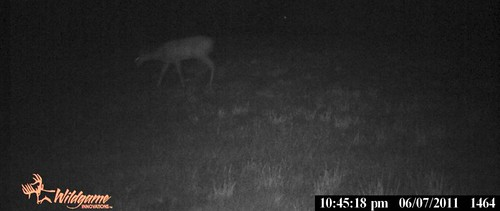 Deer3June2011GameCam