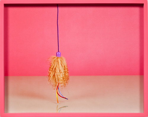 Elad Lassry, Cat Toy A, 2010