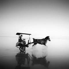 Going Home (Hengki Koentjoro) Tags: ocean travel sea horse blur reflection beach wet water speed movement sand carriage transport journey shore thelittledoglaughed