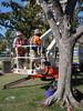 DSC02822 (Perc Tucker Regional Gallery) Tags: install 2011 strandephemera perctuckerregionalgallery