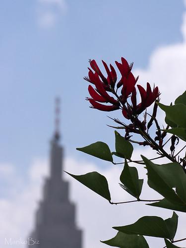 新宿御苑 2011.9.19 (eos40D TAMRON 90mm f2.8 macro)