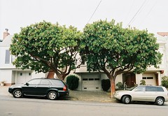 Double Arbutus (sf eyes) Tags: parking unfoundinsf contax167mt gwsf treesontuesday