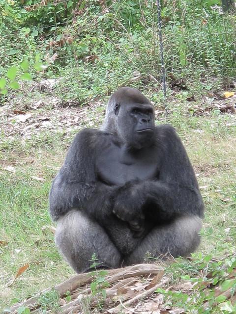 Zoo 0296