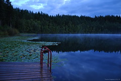 Blue and Green Reflections (Photography Through Tania's Eyes) Tags: morning trees sky mist lake canada nature water pine clouds reflections landscape photography photo dock flora nikon photographer bc image britishcolumbia earlymorning photograph ladder lilypads treeline aquaticplants clearwater beforesunrise catails dutchlake wellsgraycountry nikond90 copyrightimage taniasimpson dutchlakeresort