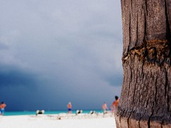 Rolling Storm (Steph Mullins) Tags: blue sky people brown sun holiday tree beach nature water mexico sand yucatan steph bark abroad peninsula picnik cinemascope