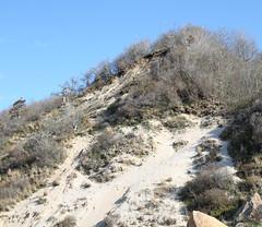 Eroding Coastal Bluff (sandy richard) Tags: geology wildwood wildwoodstatepark newyorkstateparks longislandbeaches sandyrichard longislandgeology sandrarichard wildwoodstateparkgeology