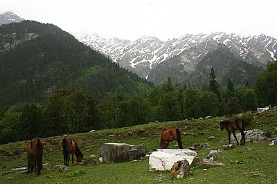 Padri- campsite