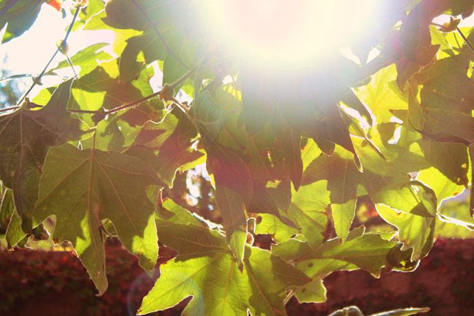 Fall | Sunflare