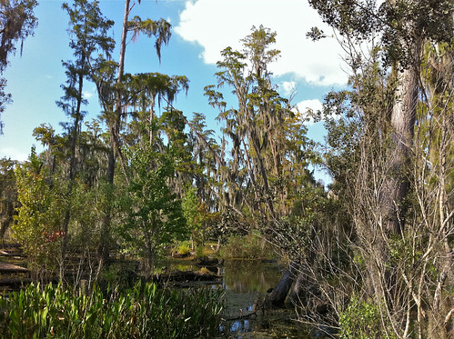 Rosen Shingle Creek Nature trail by alumroot