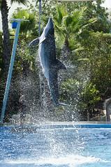 Twist (Hugo Carvoeira) Tags: show life cute portugal water zoo amazing nikon marine dolphin fast trainers entertainment ii rotation algarve nikkor 18200 vr albufeira zoomarine d7000 mygearandme