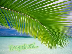 Tropical 2