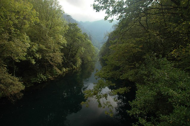 Bosque de ribera. Rio Eume