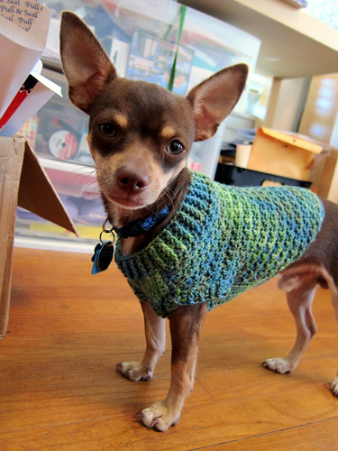 Knitting Pattern For Teacup Dog : Oh Cute Animals on Pinterest