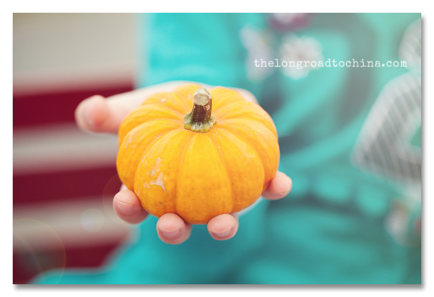 Orange Mini Pumpkin in Hand BLOG