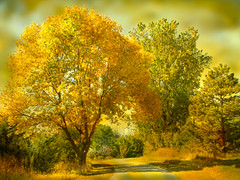 The Golden Light (jackaloha2) Tags: autumn trees light fall texture leaves canon golden path glorious motat idream naturepoetry thegoldenlight texturedlayers canoneosdigitalrebelxsi tatot dragondaggerphoto magicunicornverybest jackaloha2 photoshopcs5