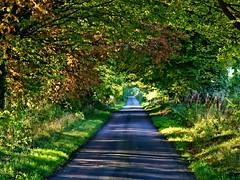 road to somewhere (algo) Tags: road uk shadow england sunlight green interestingness topf50 bravo topv1111 topv999 topv222 explore algo topf100 latesummer 100f thechilterns 50f abigfave explore210 110927