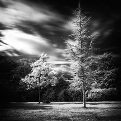 . (ant_sk) Tags: trees sky blackandwhite bw monochrome grass clouds pen square movement infrared essex hoyar72infraredfilter ndgradfilter olympusep2 lumixgvario1442mm danburylakescountrypark