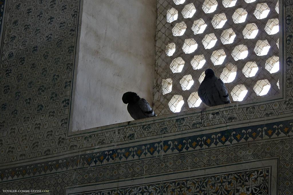 Os pombos ficam de guarda ao mausoléu.