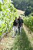 vineyard022LK