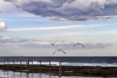 _MG_1701_One Up Two Down (The0dora Photography) Tags: ocean blue sea sky seagulls colour birds clouds newcastle baths railing sigma1770 canon7d dorcam16