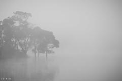 Floating in the mist... Trees on the banks of the Banasura Sagar reservoir (stalin.sm) Tags: mist kerala wayanad mistymorning vythri padinjarathara