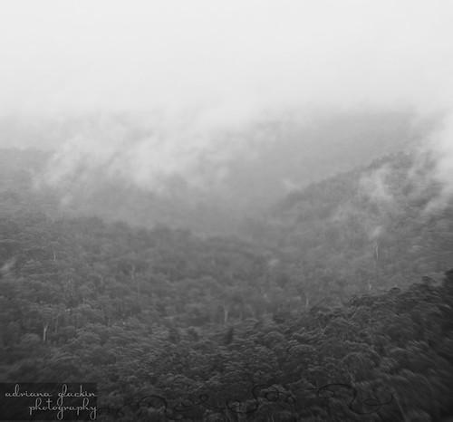 mist & fog in springtime_3