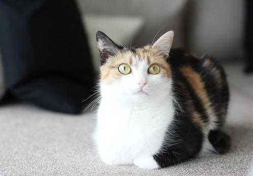 Friend's Cat