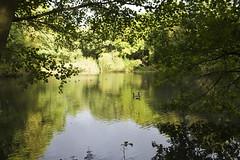 Stock Pond, Hampstead Heath, N6 (Tetramesh) Tags: uk greatbritain england london river walking walks unitedkingdom britain walk rivers londres fleet londra londen lostriver londinium lontoo llondon riverfleet strangeattractor londone londyn llundain londn  lostrivers londonriver londain londono londonsrivers tetramesh londrez walklondon  loundres londonrivers londonslostrivers londr lndra  strangeattractorcouk flot