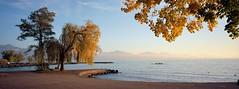 Le port de Vidy, un soir d'automne (Tonton Dave) Tags: autumn trees lake automne landscape switzerland suisse kodak lac lausanne arbres vidy paysage xpan vaud ektar lacléman