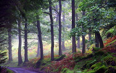 Atholl Woods. (eric robb niven) Tags: autumn scotland woods spiders web dunkeld lochs foxgloves atholl breathtakinglandscapes
