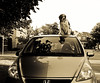 Roof Rack (Paguma / Darren) Tags: dog car goggles hound floyd doggles