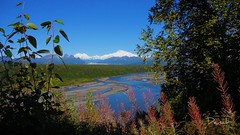 I fell in love with Denali - mountains - Alaska - landscape (blmiers2) Tags: travel pink blue autumn trees mountain mountains green fall nature alaska landscape photography nikon explore coolpix denali s3000 2011 blm18 blmiers2