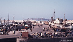 Port of Essaouira with Mogador Isles in the Background (Hart Walter) Tags: morocco essaouira mogador middleatlasmountains falcoeleonorae eleonorasfalcon berberfestival ilesdemogador