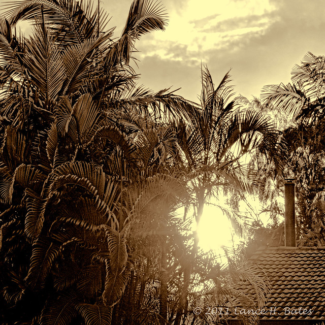 20110913 Golden Hour on palms