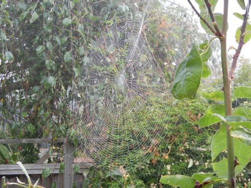 Spider Web _ 4717
