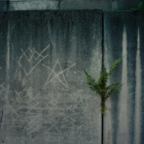 Fern Sprout Scratching Graffiti