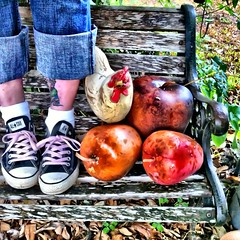 a cHicKeN~soMe AppLe GouRds~&~cHuCk (sherrYgibsoN~here & there...) Tags: apple square mac texas sneakers converse squareformat sherry normal chucks chucktaylors allstars 4g iphone hbm 2011 inthebackyard thechicken westcolumbia applegourds mybench chuckandme iphoneography benchmonday benchanyday happyoriginalbench instagramapp uploaded:by=instagram unfinishedunofficialunfaithful~365daysyr4