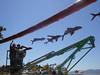 DSC02928 (Perc Tucker Regional Gallery) Tags: install 2011 strandephemera perctuckerregionalgallery