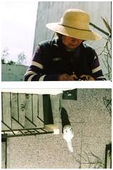 (Noxces) Tags: petra abuela gata tigre dptico
