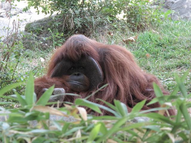 Zoo 0341