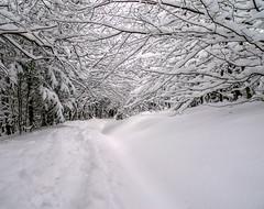 2.- Snowshoeing in Transylvania (David Ruiz Luna) Tags: snow day explore romania transylvania picnik mygearandme mygearandmepremium mygearandmebronze blinkagain artistoftheyearlevel2 pwwinter
