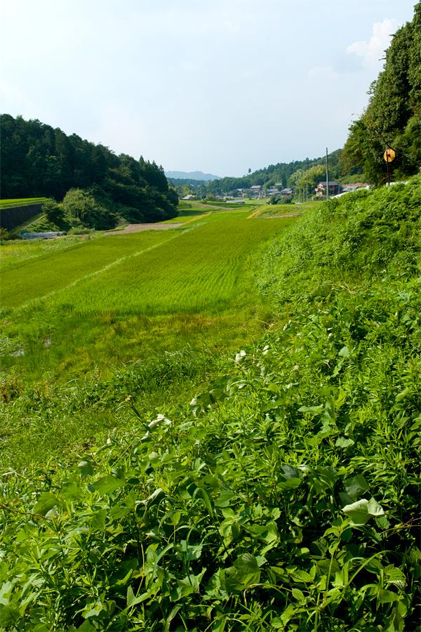 九品の滝(周辺)|滋賀県栗東市