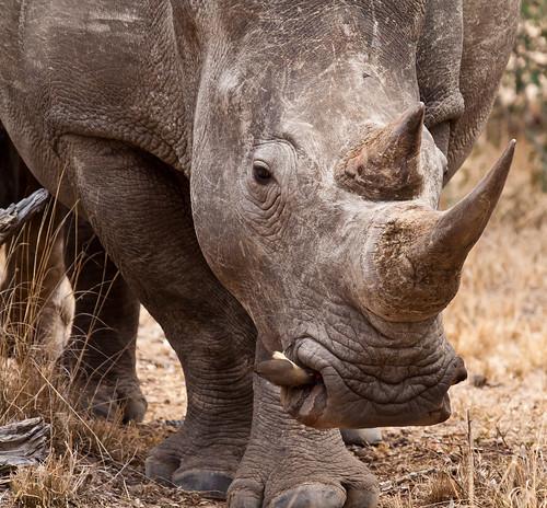 World Rhino Day - 22 September 2011 by gerdavs