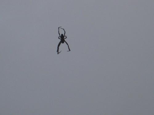 2011 09 22 spider 005