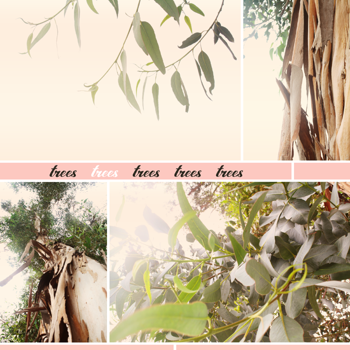 {september} trees | collage