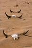 Death in the Namib (hannes.steyn) Tags: africa abandoned nature canon death town sand desert dunes rustic horns getty ghosttown namibia reserves namib namibdesert 550d hannessteyn canonefs1855mmf3556isusm canon550d eosrebelt2i namibnaukliftpark grillenberger gettyimagesmeandafrica1