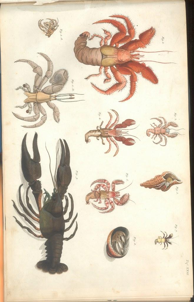 Versuch einer Naturgeschichte der Krabben und Krebse d