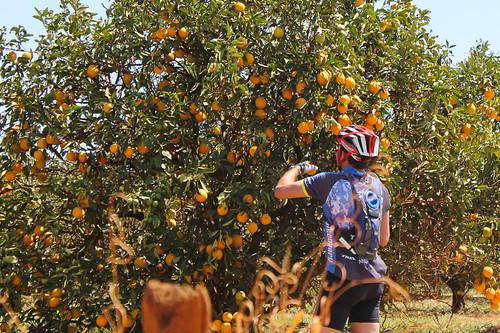 é... Pegando laranja fiado :-)